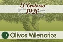 Venta de olivos Milenarios