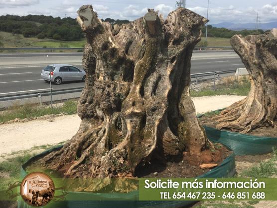 Venta de Mega olivos en Madrid