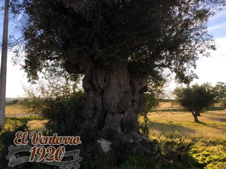 Mega Olivo 4