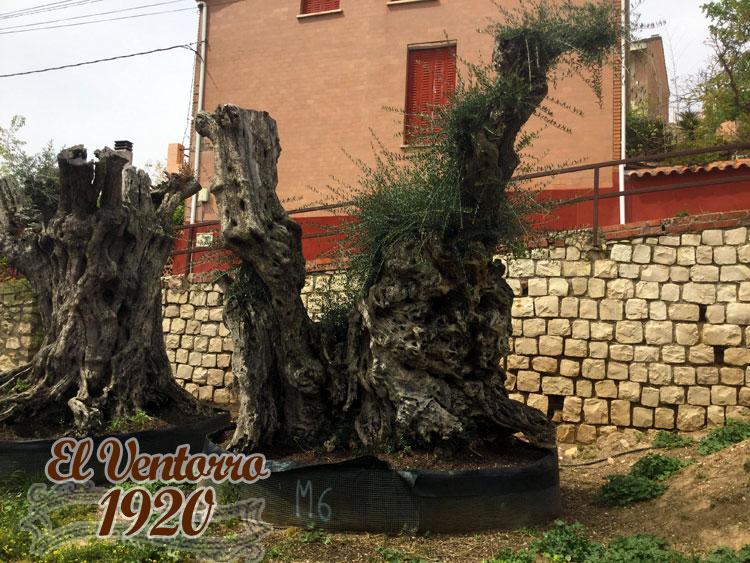Olivos Milenarios 06