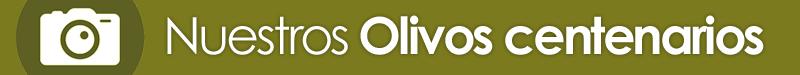 galeria imagenes de olivos