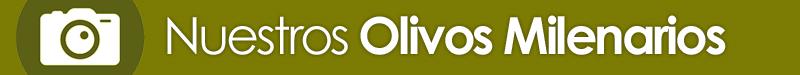 galeria olivos milenarios