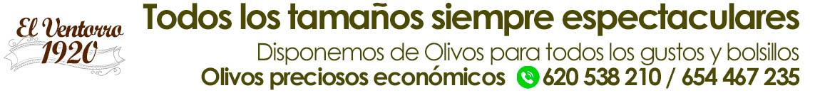 Venta de olivos en Madrid