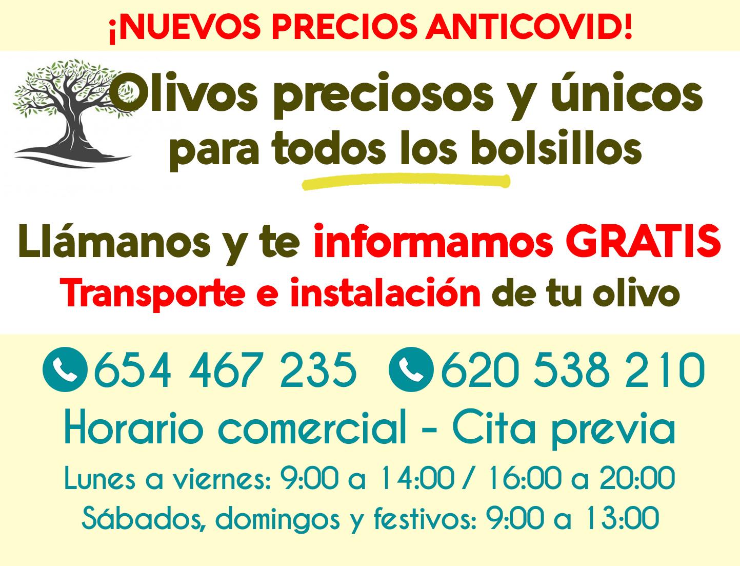 Venta de olivos Madrid